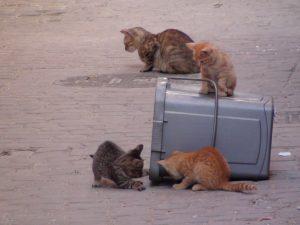 モロッコ・フェズの親子猫